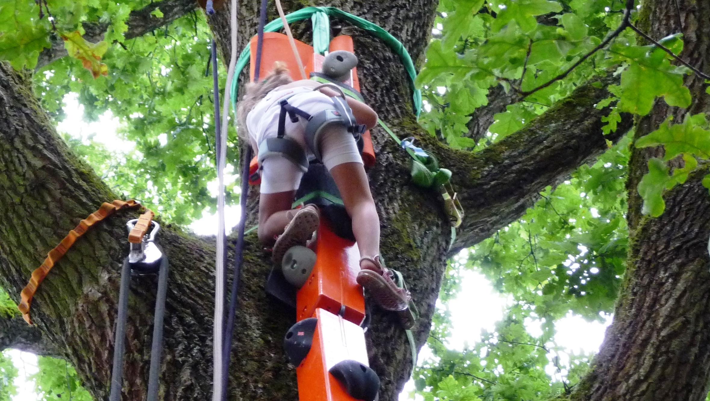 Kletterschlange Baum